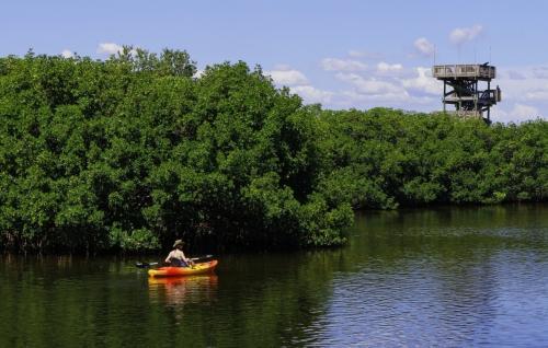 Kajki na rzece w lesie Giżycko na Mazurach
