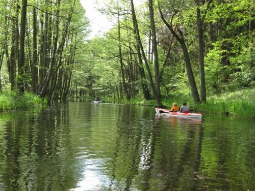 Spływy kajakowe Sapina